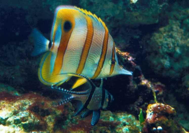 Les poissons d 39 aquarium marin for Bac a poisson 500l