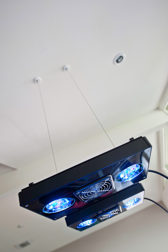 L'éclairage Led selon Ecotech, le Radion XR30W.(34 Led) 700 euros pièces...